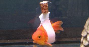 pez discapacitado