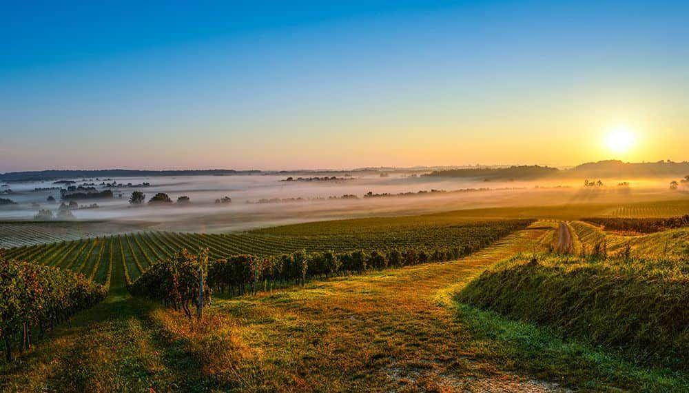 Panorámica de unos viñedos de La Rioja al amanecer.