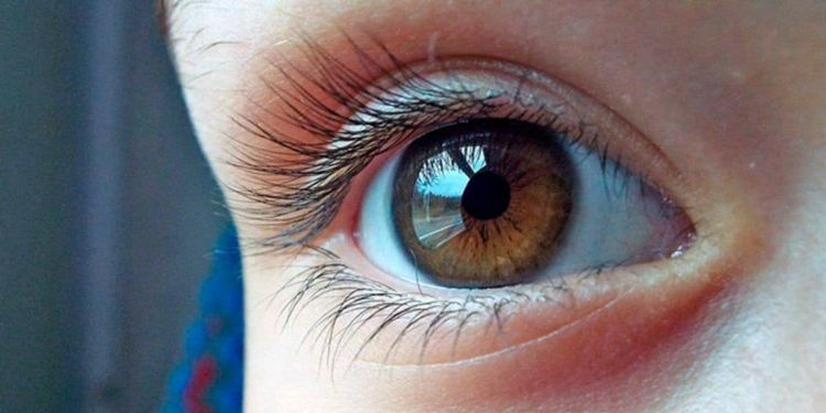 Ojos humano