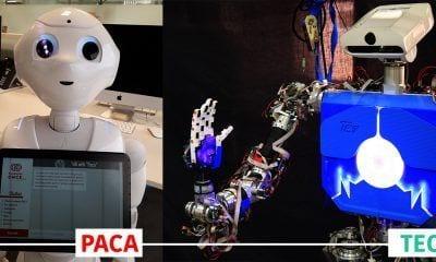 robots paca y teo