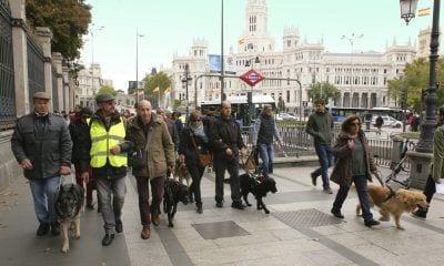 Imagen de una edición anterior del Paseo con Perros Guía por Madrid