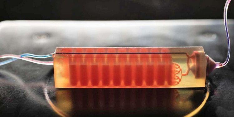Crean un dispositivo celular en 3D que permite detectar células cancerosas