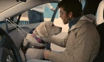 Persona ciega con perro guía