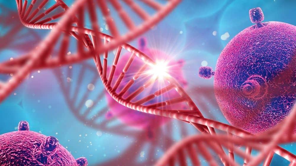 Un nuevo compuesto, encontrado por investigadores de Brasil, actúa contra las células tumorales del ovario sin afectar a los tejidos sanos
