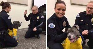 Eddie vestido de perro policía