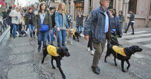Perros guía de la ONCE