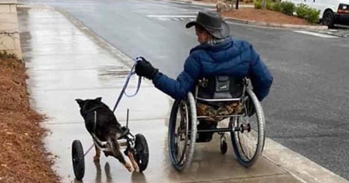 Perro en silla de ruedas junto a su dueño