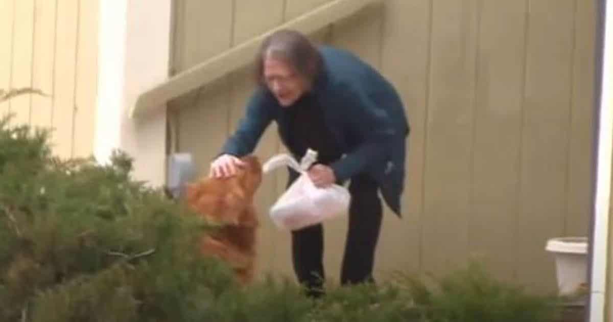Anciana recibiendo la comida traída por el animal | Foto: EP