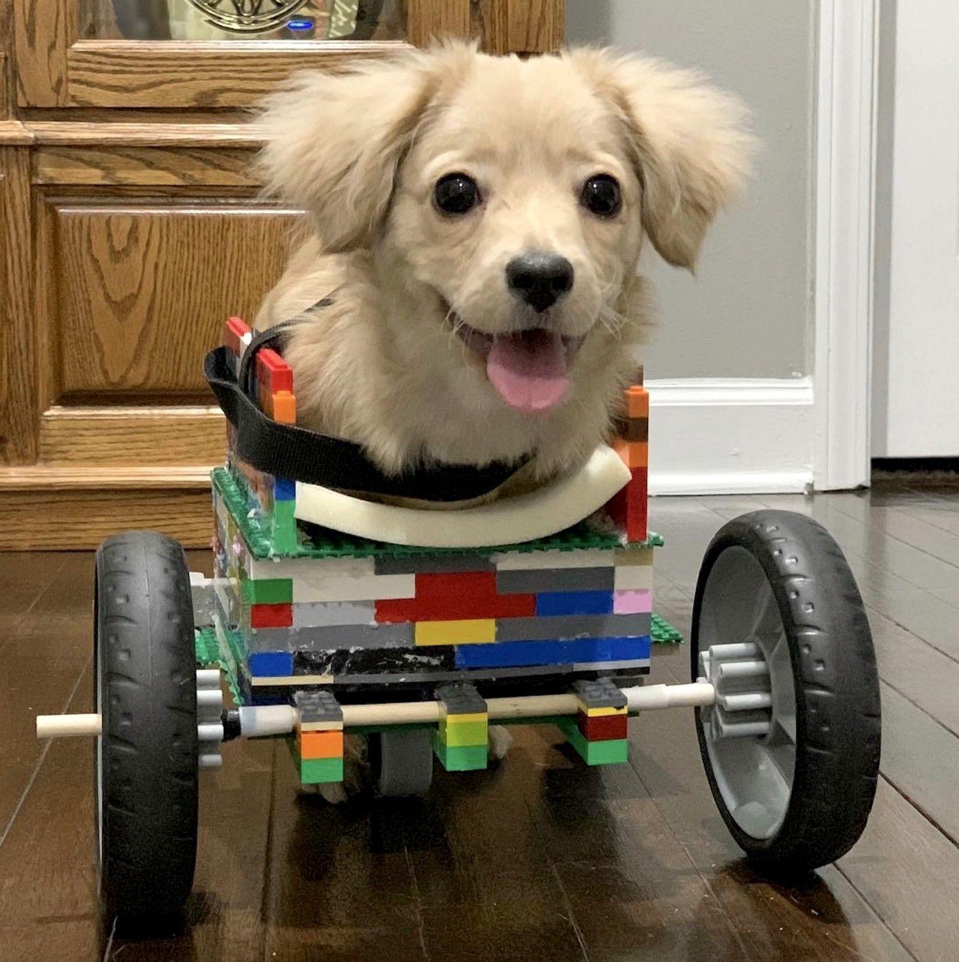 Perrita con la silla de ruedas de lego