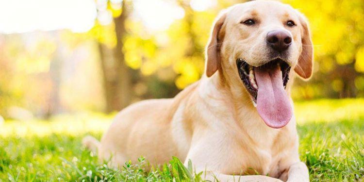 Stevie, el perro con trastorno neurológico congénito que disfrutar jugando