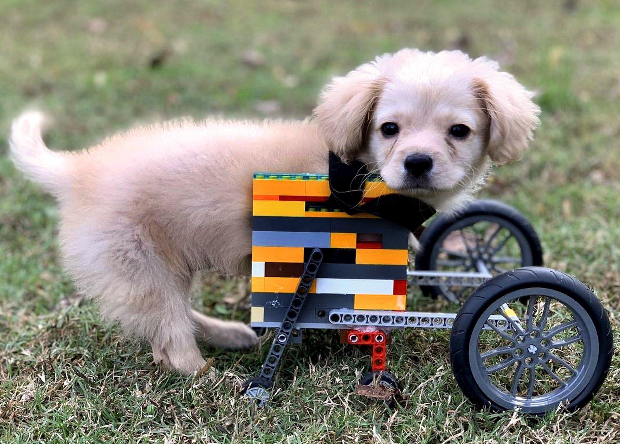 cachorro con silla de ruedas de LEGO