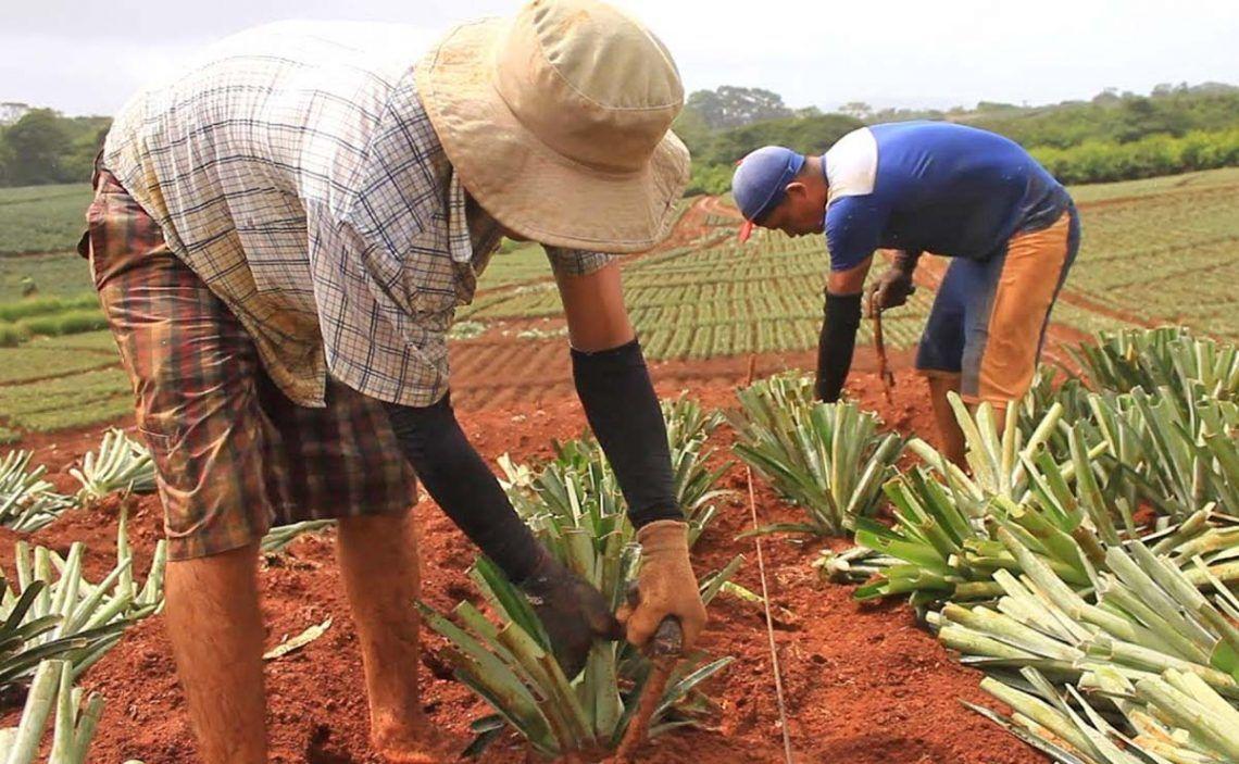 Persona realizando trabajos agrícolas