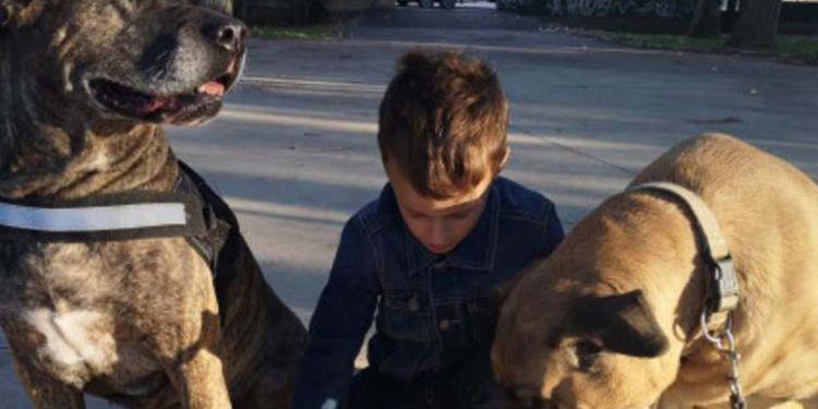 Joan, niño con autismo, junto a perros de asistencia