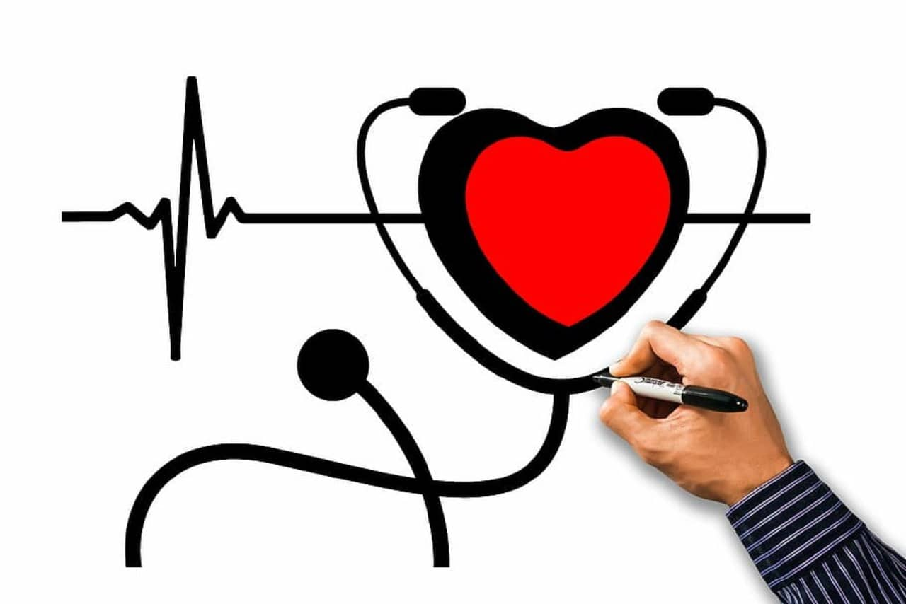sistema circulatorio corazón