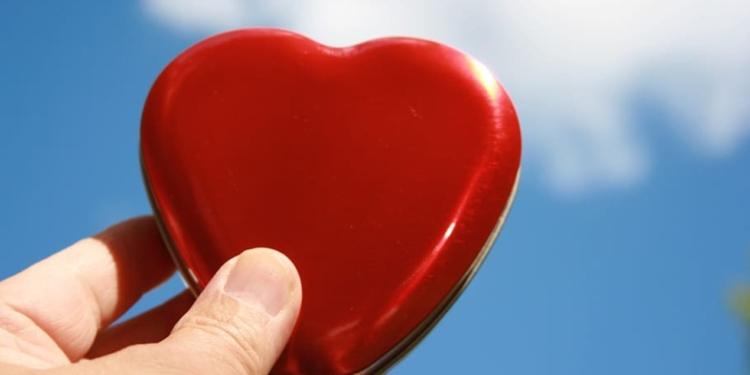 sistema circulatorio habitos corazon