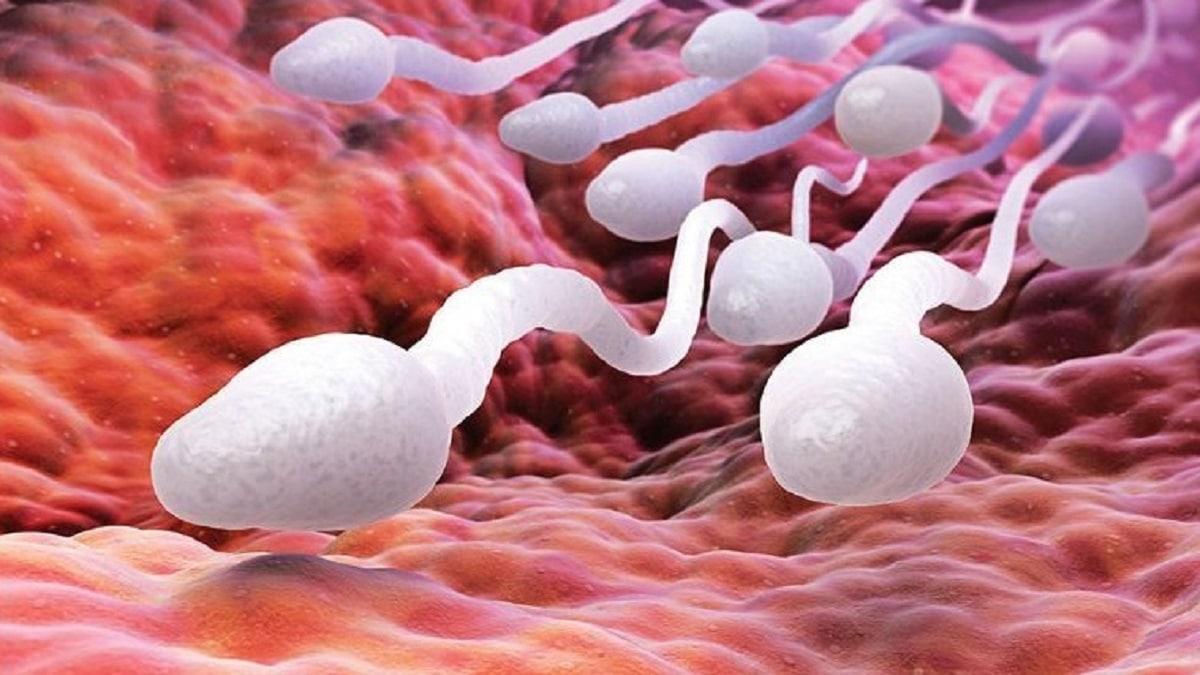 ácido fólico fertilidad