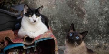 gatos afecciones