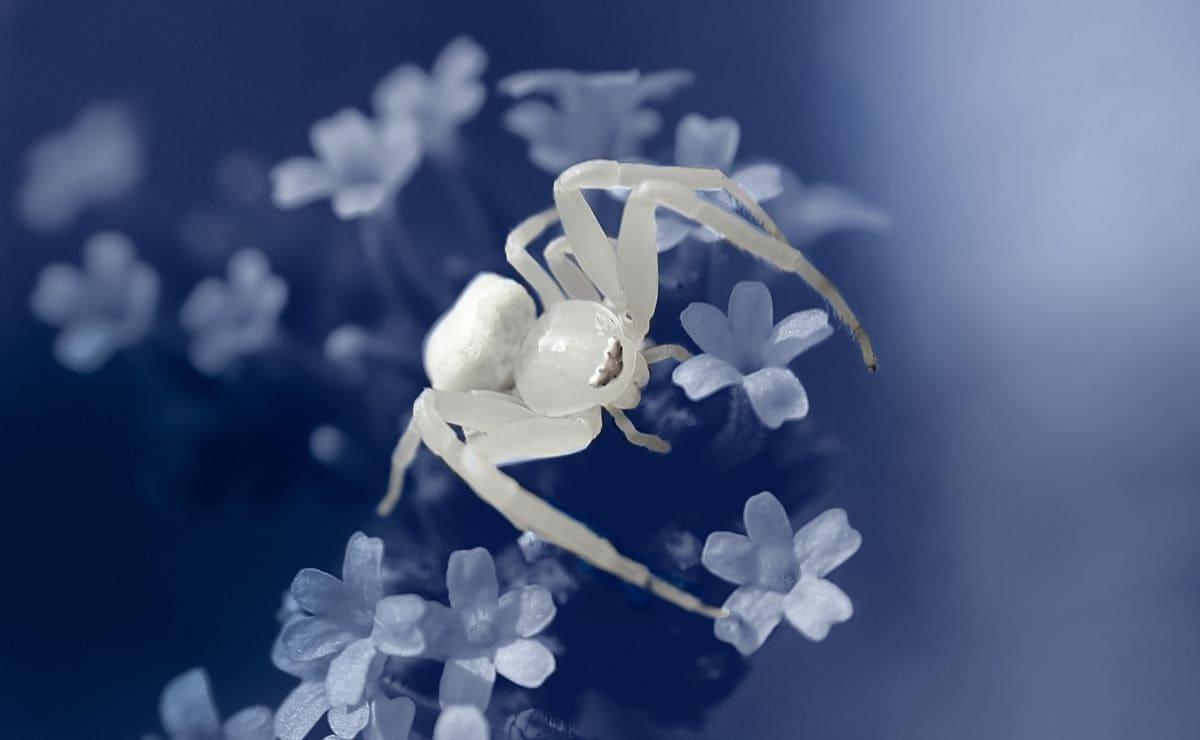 soñar con arañas blancas