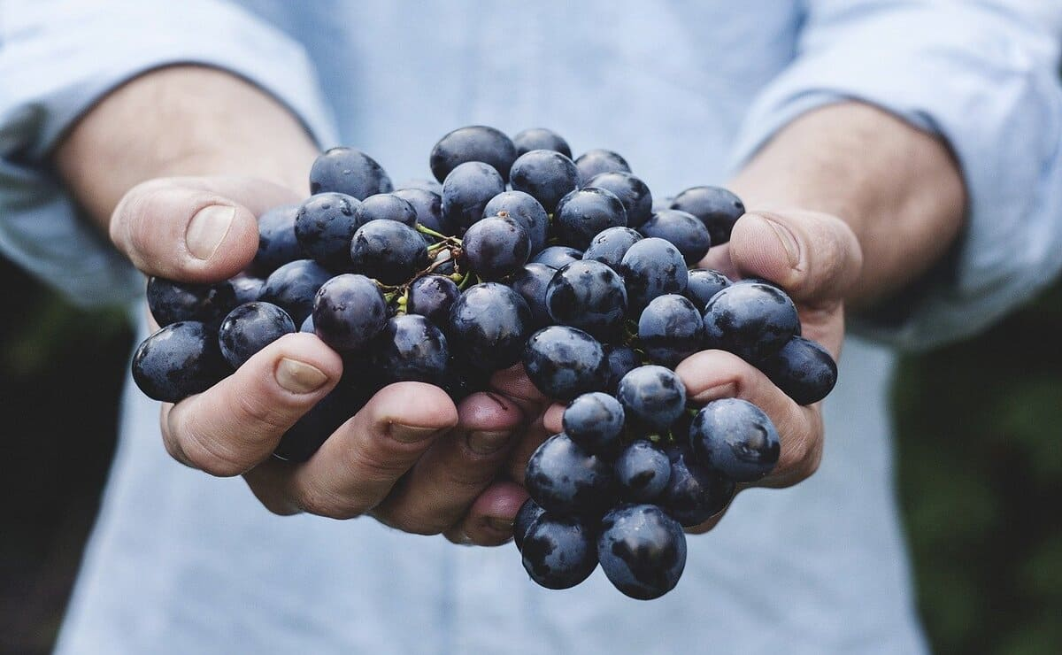 uvas para hacer jugo