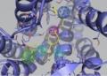Estructura del fármaco raloxifeno anclado al receptor de bradicnina, sustancia que podría causar inflamaciones asociadas a la Covid-19 UPC