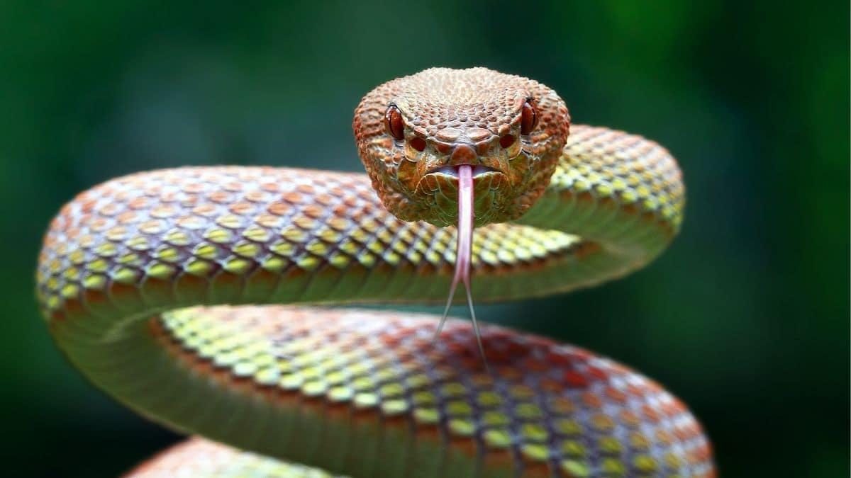Qué Significa Soñar Con Serpientes Significado De Los Sueños