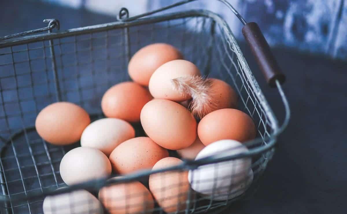 los huevos son indispensables para la dieta humana