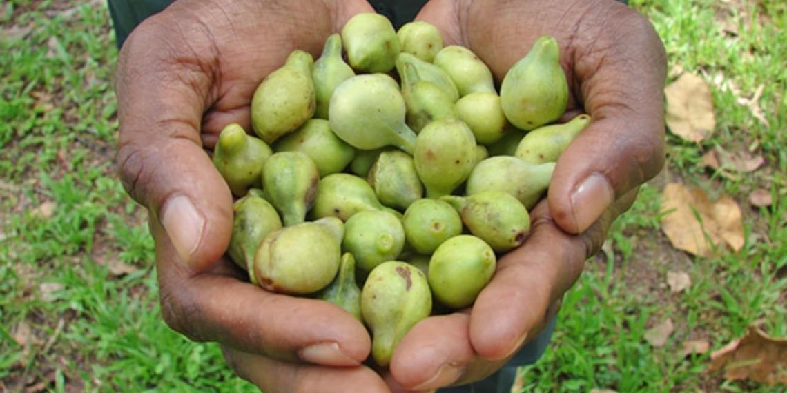 Ciruela Kakadu vitamina C
