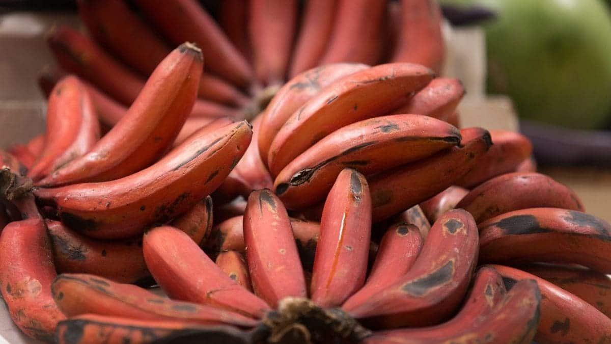 plátano rojo