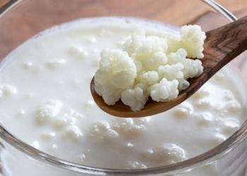 Alimento probiótico kéfir