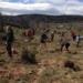 Correos ayuda en la reforestación de bosques