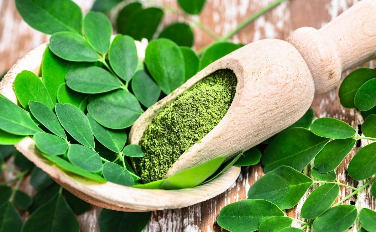 Ingrediente Moringa