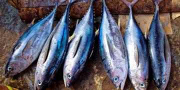 Pescado azul vitamina D