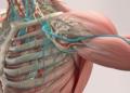 vitamina D función muscular