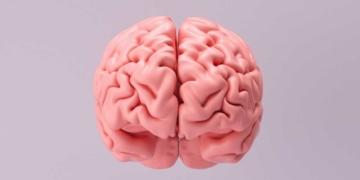 Cerebro Triglicéridos