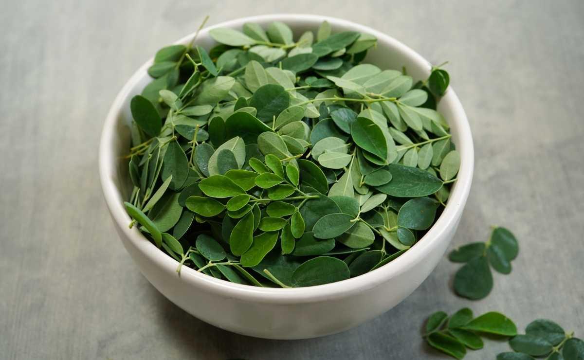 Moringa, planta antioxidante superalimento