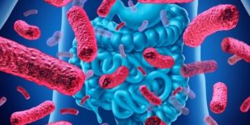 alimento probiotico intestino delgado