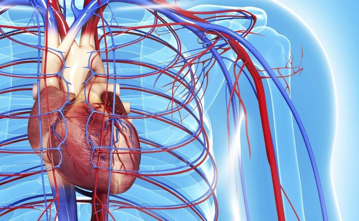 vitamina D corazón