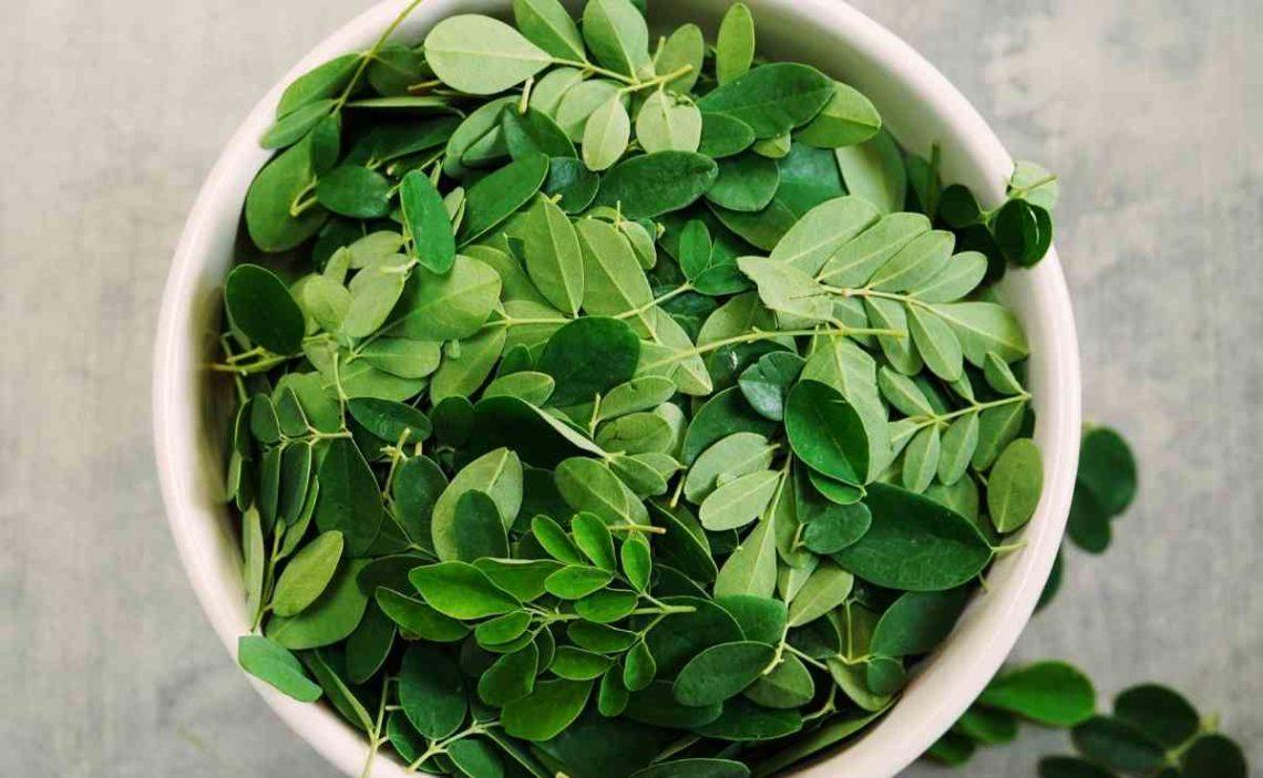 Moringa Superalimento antioxidante
