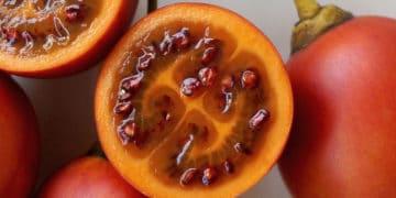 Tomate de árbol Solanum betaceum
