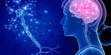 Sistema nervioso neurología