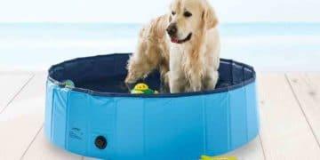 Piscina para perros de Lidl