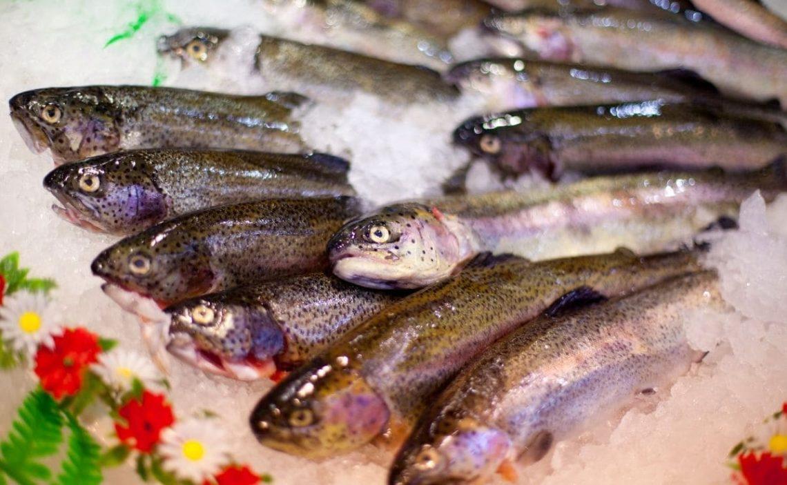 vitamina D pescados grasos