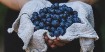 neurología arándanos flavonoides