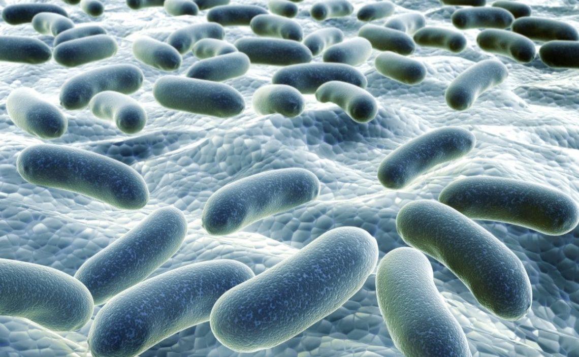 flora bacteriana organismo