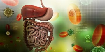 sistema digestivo flora intestinal yogur
