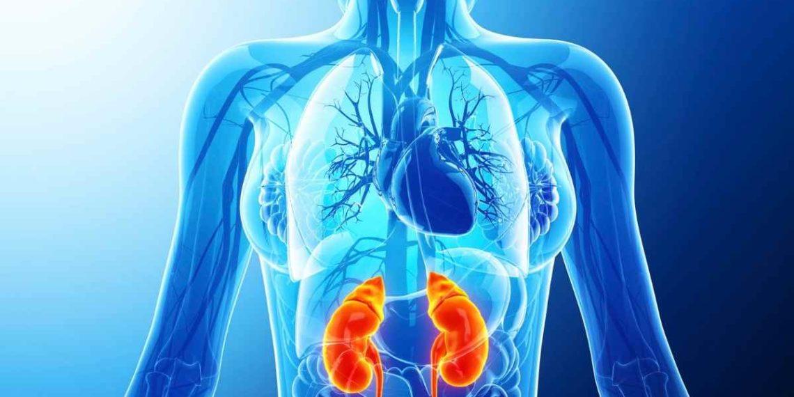 Así se fortalece el sistema inmune según expertos de Harvard