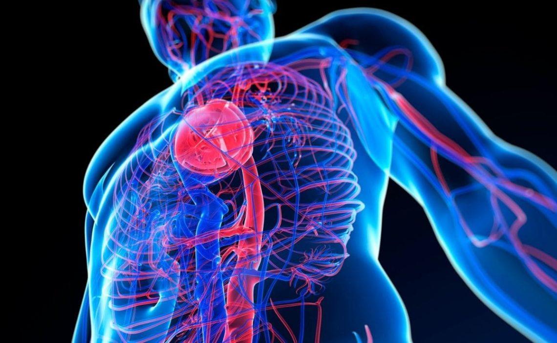 vitamina B12 salud cardiovascular