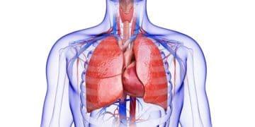 Salud pulmonar vitamina C