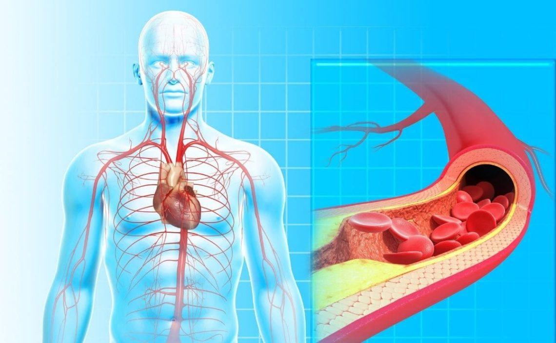 Aparato circulatorio circulación sanguínea