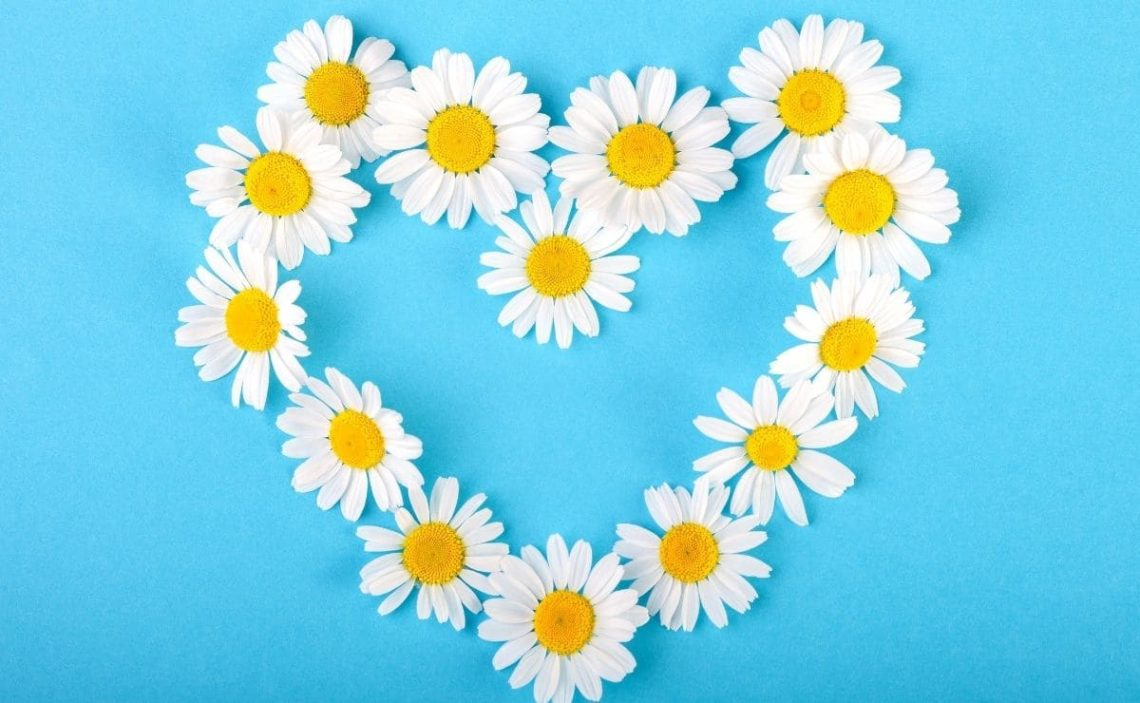 manzanilla corazon salud